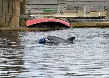 dolfijnverijking
